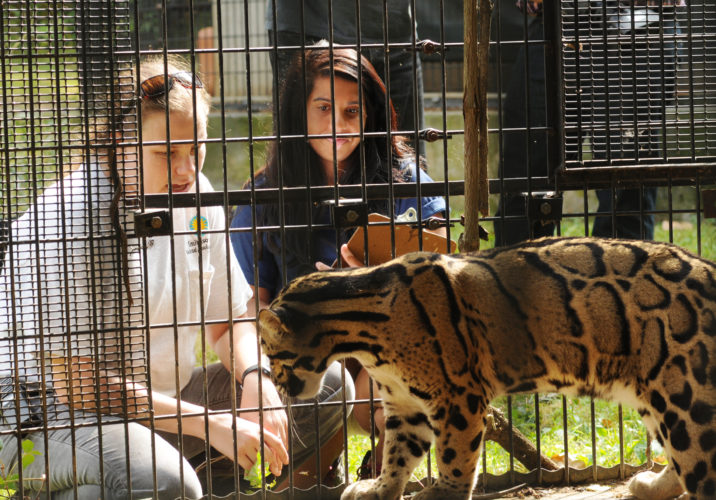 Students looking through cage bars at endangered clouded leopard