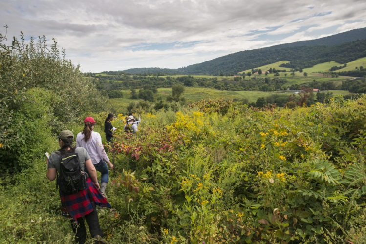 Students trek through brush with view of valley in background