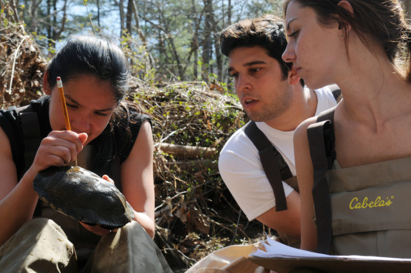 Three students huddle around a wood turtle while one marks a radio tag on its shell with a pencil