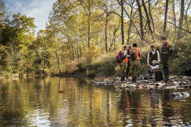 Group of students sampling wood turtles beside forested creek